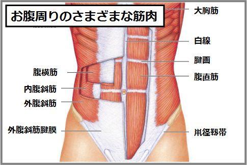 腹筋インナーマッスル