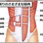 ドローイン効果で鍛えられる腹部の筋肉
