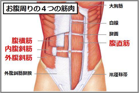 腹筋を割るなら知っておきたい4つのお腹の筋肉