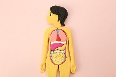 腸下垂の原因はむくんだ腸の水分の重さにあった