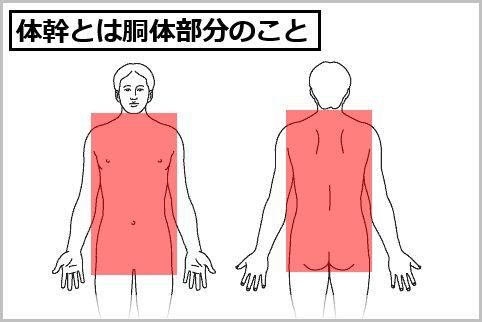 体幹トレーニング方法は筋肉のバランスに注意