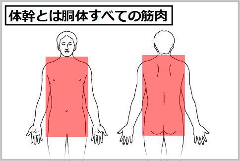 体幹とは胴体すべての筋肉