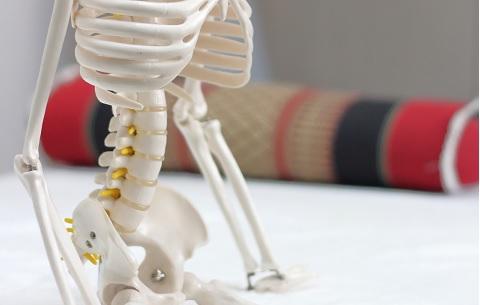 コアトレーニングの必要性を骨格標本で理解する