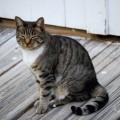猫背を治す方法は単純!肩甲骨を引き寄せるだけ