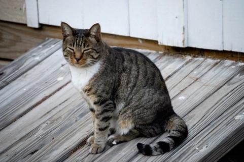 猫背を治すならインナーマッスル