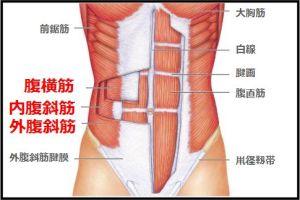 「腹横筋と腹斜筋」が腹筋のインナーマッスル