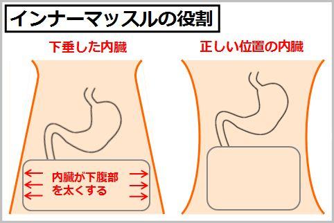 胃下垂の治し方!!インナーマッスルを鍛えるべし