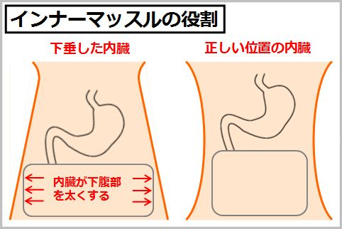 体幹のインナーマッスルが内臓を正しい位置にキープ