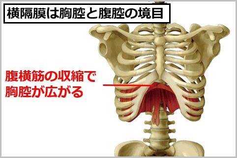 横隔膜呼吸とは腹式と胸式のいいとこ取りだった