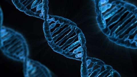 4人に1人「筋トレ効果」が出ない遺伝子
