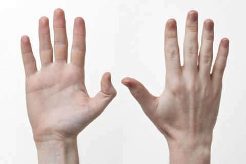 筋持久力は運動中に手の平を冷やすとアップする