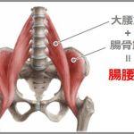 腸腰筋は重要なインナーマッスル