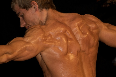 筋肉質になりたいなら遺伝子組み換え!?