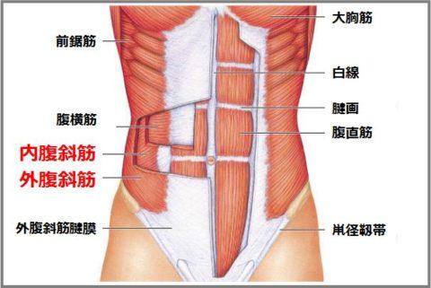 腹斜筋の鍛え方はひねりながらニートゥチェスト