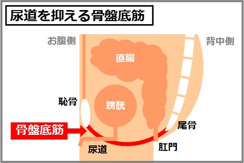 骨盤底筋群が動かせるようになるタオルトレとは