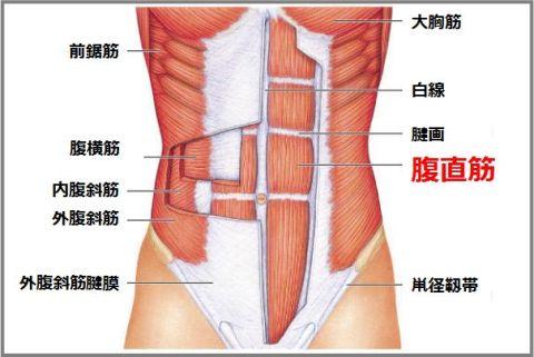 レッグレイズは腹直筋の下部を意識