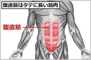 腹筋を割るための腹直筋はタテに長い