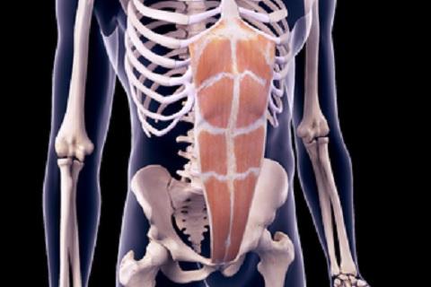 腹直筋の鍛え方を正しく理解して腹筋を割る方法