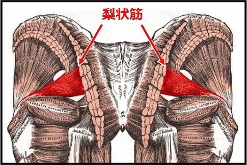 梨状筋ストレッチは足を内側にひねるのが基本