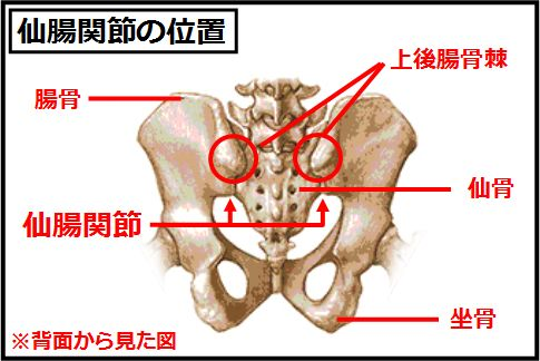 仙腸関節は骨盤後面にある隆起した部分のすぐ下