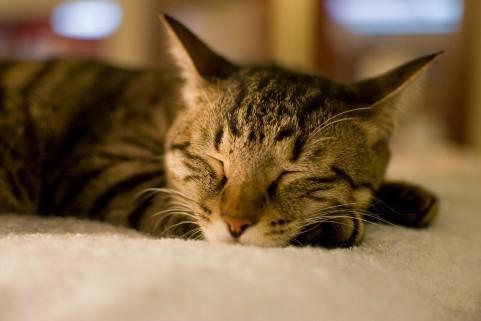 ファスティングダイエットは急に眠気に襲われる