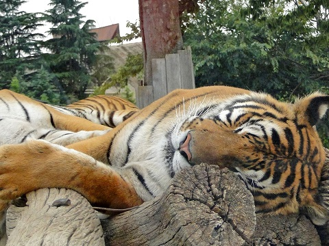よく眠れる方法は夕方に筋トレをすることだった