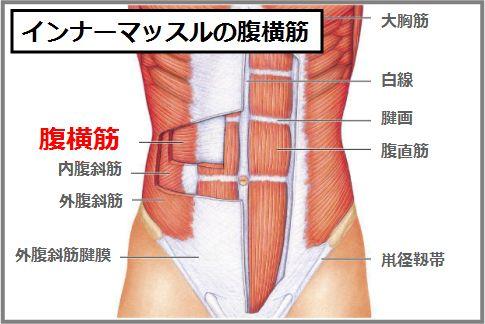 ぽっこりお腹の原因「内臓下垂」を解消する