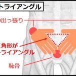 下腹部の筋トレは骨盤トライアングルが大切